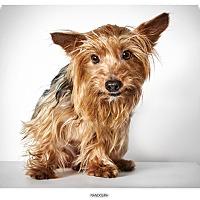 Adopt A Pet :: Randolph - New York, NY