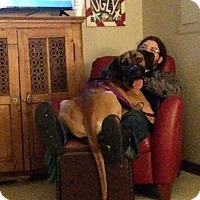 Adopt A Pet :: Kahuna - Mandeville, LA