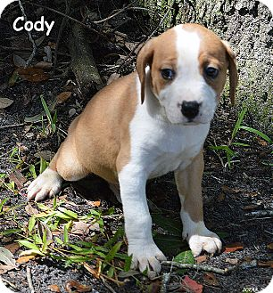 Treeing Walker Coonhound/Catahoula Leopard Dog Mix Puppy for adoption in Lake Pansoffkee, Florida - Cody