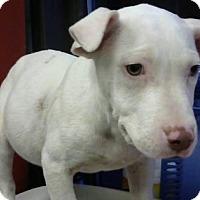 Adopt A Pet :: Broc - ADOPTED - Decatur, GA