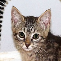 Adopt A Pet :: DeeDee - Durham, NC