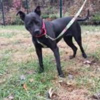 Adopt A Pet :: Kenya - Greensboro, NC