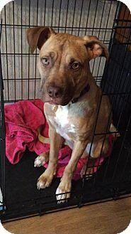 Shepherd (Unknown Type) Mix Dog for adoption in Jefferson, Louisiana - Fern - URGENT FOSTER NEEDED!