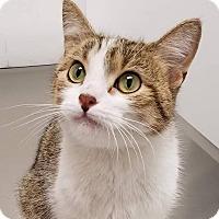 Adopt A Pet :: Eliza - Springfield, IL
