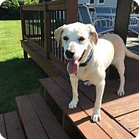 Adopt A Pet :: Mary Jane - Deer Park, NY