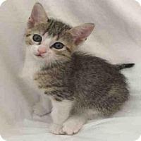 Adopt A Pet :: PINKIE - Houston, TX