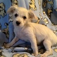 Adopt A Pet :: Hawaii: Lanai - Las Vegas, NV