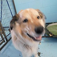Adopt A Pet :: Shane - Sparta, WI