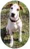English Setter Mix Dog for adoption in Olathe, Kansas - Jethro