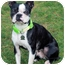 Photo 3 - Boston Terrier Dog for adoption in Lynnwood, Washington - Kendall