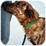 Photo 3 - Dutch Shepherd Mix Dog for adoption in Floyd, Virginia - Jenny