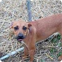 Adopt A Pet :: SWVA - Daisy - Houston, TX