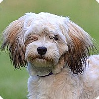 Adopt A Pet :: *Tillie - PENDING - Westport, CT