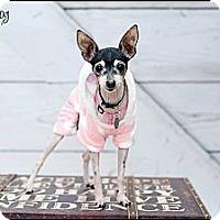 Adopt A Pet :: Cookie - Hilliard, OH