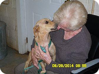 Dachshund Mix Dog for adoption in Bartonsville, Pennsylvania - Winnie