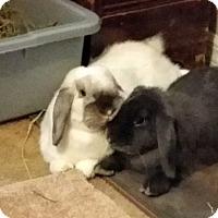 Adopt A Pet :: Shocka and Zulu - Williston, FL