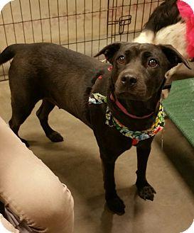 Labrador Retriever Mix Dog for adoption in Alexis, North Carolina - Queenie