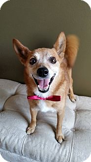 Terrier (Unknown Type, Small) Mix Dog for adoption in Baton Rouge, Louisiana - Mr.Buddy