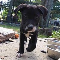 Adopt A Pet :: Data - Barnegat, NJ