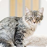 Adopt A Pet :: Laki - Fountain Hills, AZ