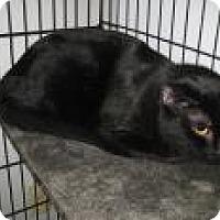 Adopt A Pet :: Tom - Jefferson, NC