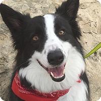 Adopt A Pet :: GUNNAR (Courtesy List) - San Pedro, CA
