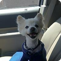 Adopt A Pet :: Dawson - Las Vegas, NV