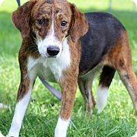 Adopt A Pet :: Irelia - Waldorf, MD