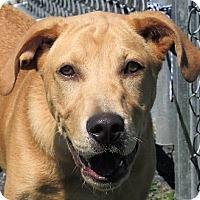 Adopt A Pet :: Bond - Germantown, MD