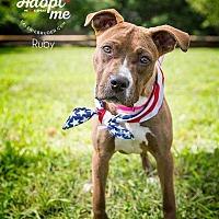 Adopt A Pet :: Ruby - Wenonah, NJ