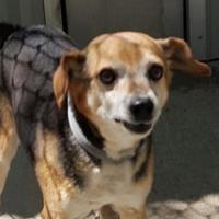 Adopt A Pet :: rascal - Wichita, KS