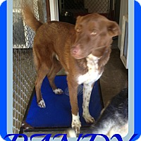 Adopt A Pet :: RANDY - Allentown, PA