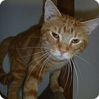 Adopt A Pet :: Marty - Hamburg, NY