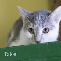 Adopt A Pet :: Talos - West Des Moines, IA
