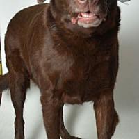 Adopt A Pet :: Reese - San Francisco, CA