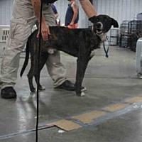Adopt A Pet :: A292335 - Conroe, TX