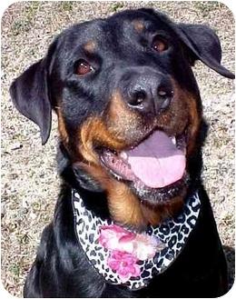 Rottweiler Dog for adoption in Huntington, New York - Sally