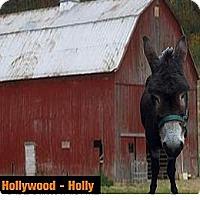 Adopt A Pet :: Ms. Hollywood - Malvern, IA