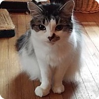 Adopt A Pet :: Suzie - Orillia, ON