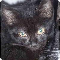 Adopt A Pet :: Batman - Davis, CA