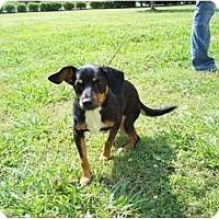 Adopt A Pet :: Mitzy - Adamsville, TN