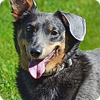 Adopt A Pet :: Gracie - PENDING, in Maine - kennebunkport, ME