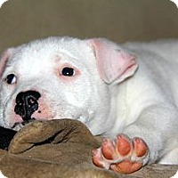 Adopt A Pet :: Squeaky - Dallas, GA