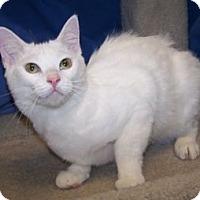 Adopt A Pet :: Dean - Colorado Springs, CO