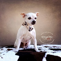 Adopt A Pet :: Aim - Lubbock, TX