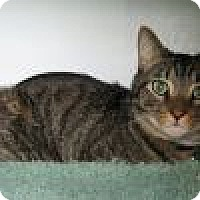 Adopt A Pet :: Howie - Powell, OH