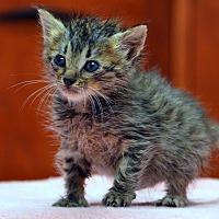 Adopt A Pet :: Jill - Jackson, MS