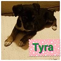 Adopt A Pet :: Tyra - LAKEWOOD, CA