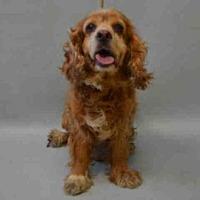 Adopt A Pet :: Royale - Flushing, NY