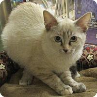 Adopt A Pet :: CLYDE - Diamond Bar, CA